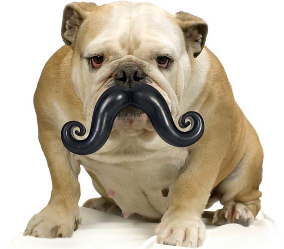 Fake Toy Dogs : Humunga stache fake dog mustache modular