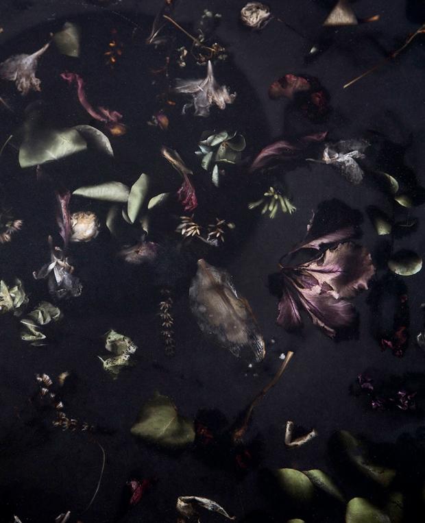 Dead Flowers Detail